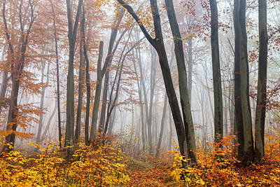 Danube Photograph - Fairy Forest by Evgeni Dinev