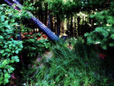 Art Print featuring the photograph Fairy Forest by Jamie Lynn