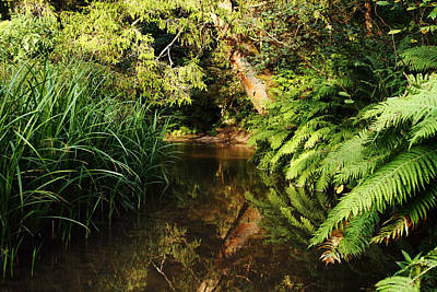 Photograph - Fairy Forest River by Alex Sukonkin