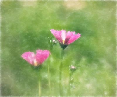 Photograph - Fairy Tale Cosmos by Kim Hojnacki