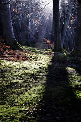 Photograph - Fairy Tale Forest Landscape by Henrik Petersen