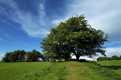 Tara Photograph - Fairy Tree Hawthorn On The Bank by Panoramic Images