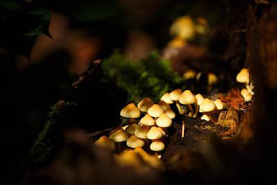 Dappled Light Photograph - Fairy Village Fungi by Izzy Standbridge