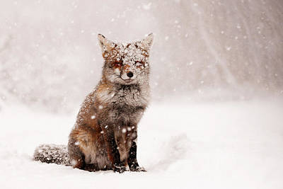Red White Photograph - Fairytale Fox _ Red Fox In A Snow Storm by Roeselien Raimond