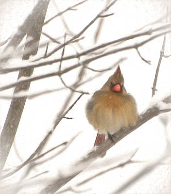 Northern Cardinal Birds Photograph - Fairytale In The Forest by Kerri Farley