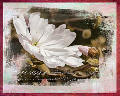 Faith Hope And Love Photograph - Faith Love And Hope - Flower Art by Jordan Blackstone