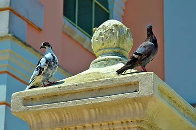 Photograph - Fajardo Pigeons by Ricardo J Ruiz de Porras