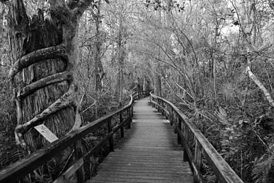 Photograph - Fakahatchee Strand Walkway by David Lee Thompson