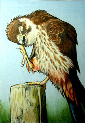 Falcons Mixed Media - Falcon by Andrea Walton