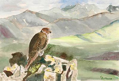 Falcon Art Print by Christine Lathrop
