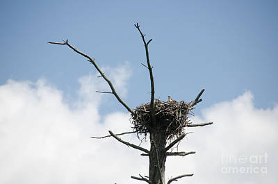 Photograph - Falcon Nest 4 by Cassie Marie Photography