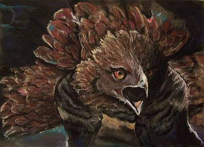 Pastel - Falcon Opera  by Peter Suhocke