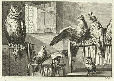 Falcon Drawing - Falcons And Owls In A Barn, Pieter Van Lisebetten by Pieter Van Lisebetten And Wenceslaus Hollar And Francis Barlow