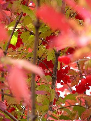 Roaring Red - Fall 08-007 by Mario MJ Perron
