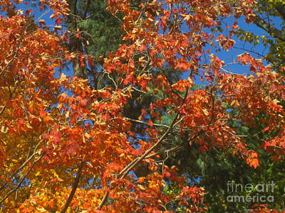 Photograph - Fall Abstract 3 by Tara  Shalton