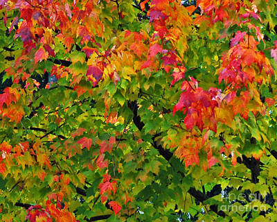 Photograph - Fall Accents by Chuck Flewelling