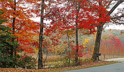 Photograph - Fall Along Silversteen Road by Duane McCullough