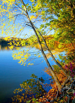 Photograph - Fall Along The Lakeshore by Carolyn Derstine