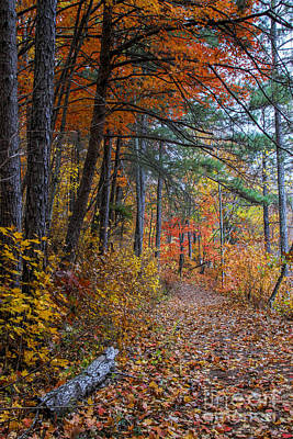 Photograph - Fall Along The Upper Lake Trail by Barbara Bowen