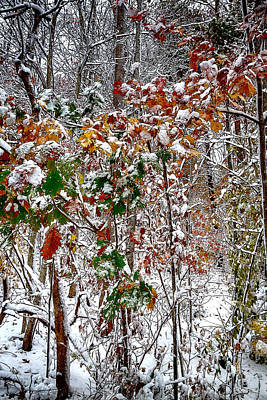 Mixed Media - Fall And Winter by John Haldane