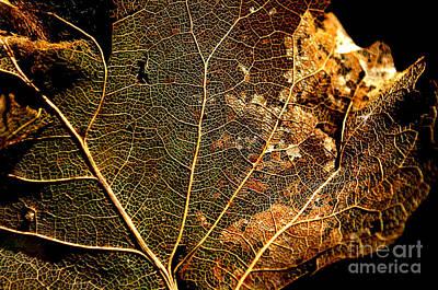 Photograph - Fall by Anjanette Douglas