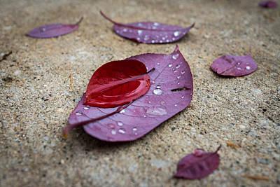 Photograph - Fall Arrangement by Bill Pevlor