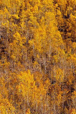 Photograph - Fall Aspens 1 by Joe Doherty