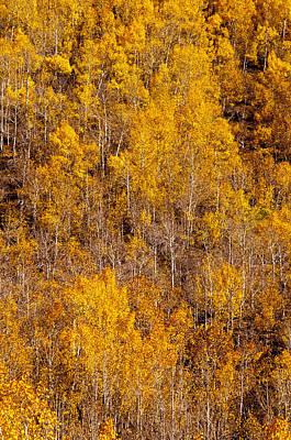 Photograph - Fall Aspens 1 by Joe Doherty