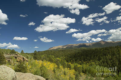 Photograph - Fall Aspens Colorado by Jeanette French