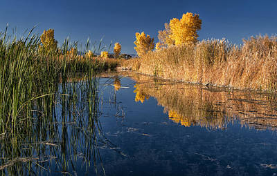 Fall At The Canal Art Print