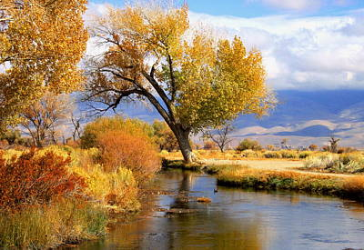 Owens River Photograph - Fall At The River by Marilyn Diaz