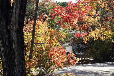 Photograph - Fall At The Rv Park by Amelia Painter