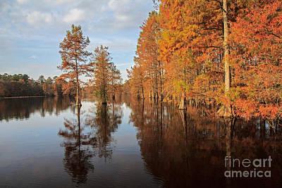 Fall At Trap Pond Art Print
