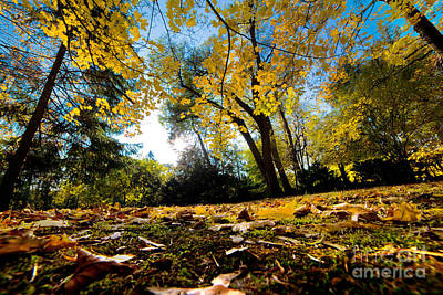 Change Photograph - Fall Autumn Park. Falling Leaves by Michal Bednarek