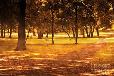 Beams Photograph - Fall Autumn Park by Michal Bednarek
