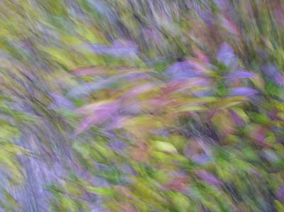 Photograph - Autumn Azaleas 1 by Bernhart Hochleitner