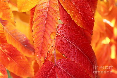 Photograph - Fall Beauty by Krissy Katsimbras