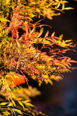 Art Print featuring the photograph Fall Berries by Mike Lee