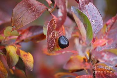 Photograph - Fall Berry by Ann E Robson