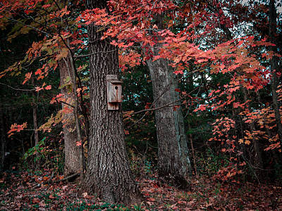 Photograph - Fall Bird House by Wayne Meyer