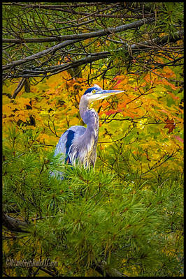 Photograph - Fall Blue Heron by LeeAnn McLaneGoetz McLaneGoetzStudioLLCcom