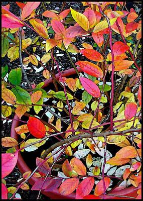 Blueberry Digital Art - Fall Blueberry Bush by Gary Olsen-Hasek