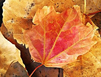 Photograph - Fall Blush  by Chris Berry
