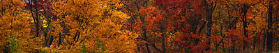 Photograph - Fall Bonanza by Cathy Shiflett