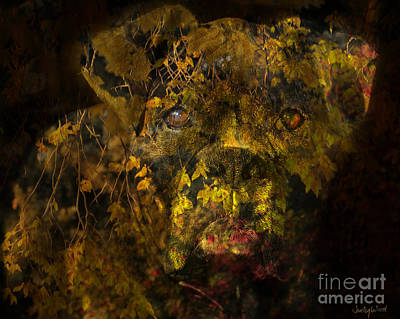 Fall Colour Digital Art - Fall Boxer by Judy Wood