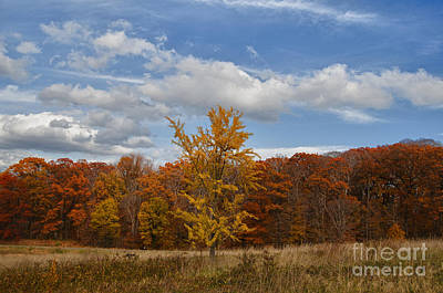 Photograph - Fall Brilliance by Terry Rowe