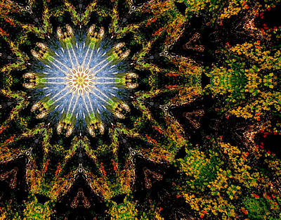 Photograph - Fall Burst by Cathy Shiflett