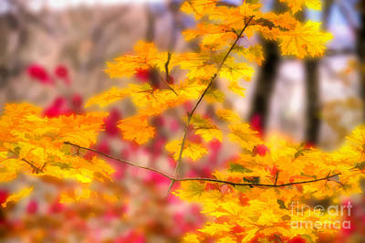 Photograph - Fall Bursting With Color by Dan Friend