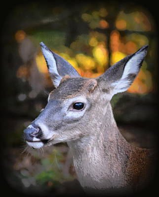 Photograph - Fall Button Buck by Sheri McLeroy