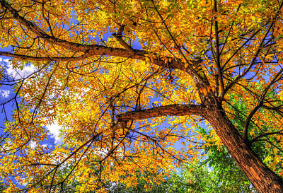 Jerry Sodorff Royalty-Free and Rights-Managed Images - Fall Canopy 12167 by Jerry Sodorff